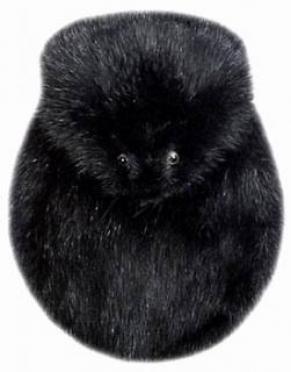 Black Muskrat